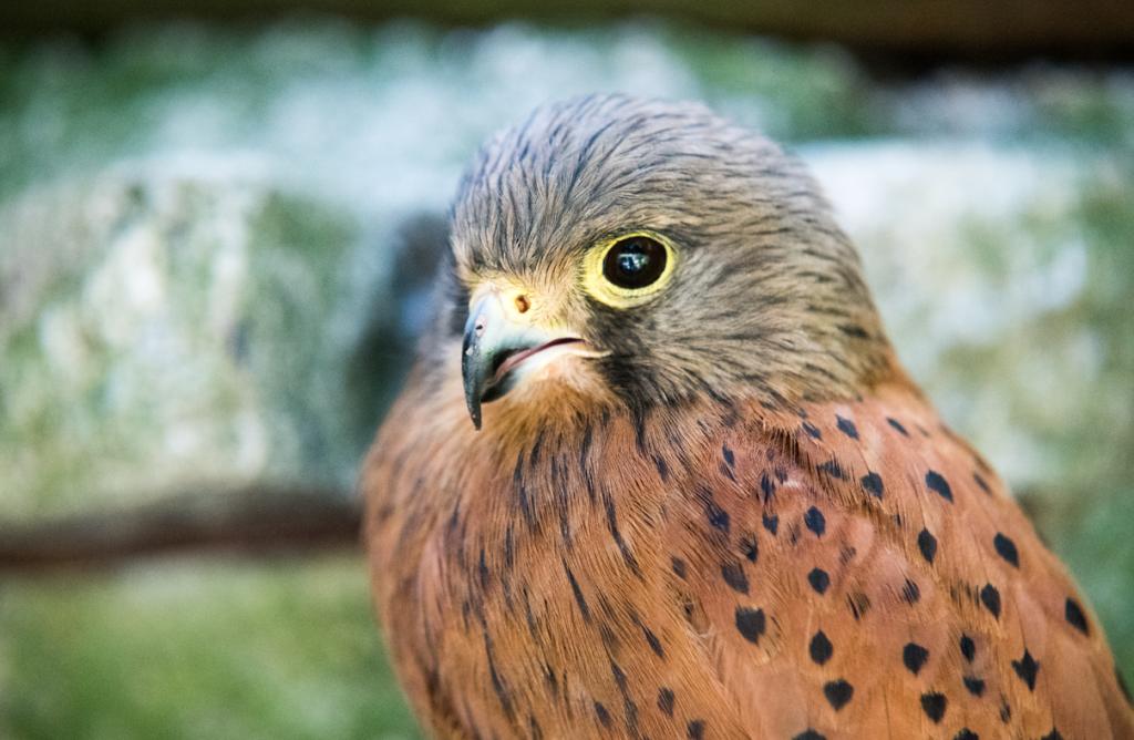Nice Falcon
